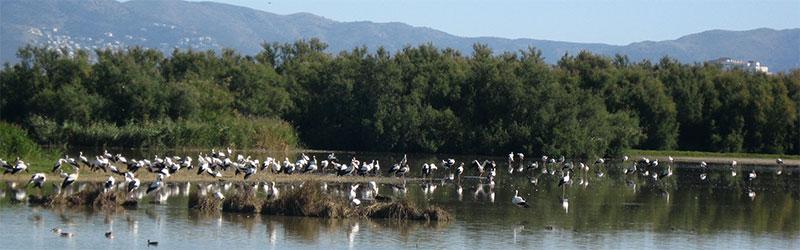 parc naturel dels Aiguamolls de l'Empordà