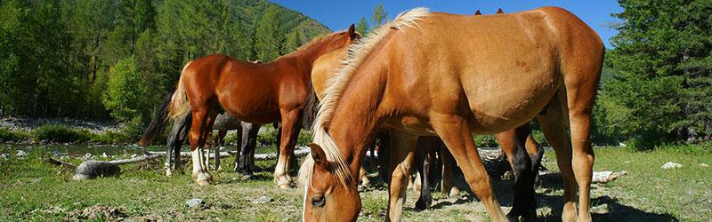 Randonnée à cheval dans le Finistère