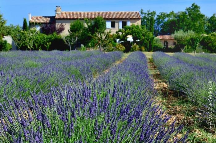 Lavandes du Luberon - Location villa de luxe - Provence / Cote d Azur / Mediterran. - ChicVillas - 16