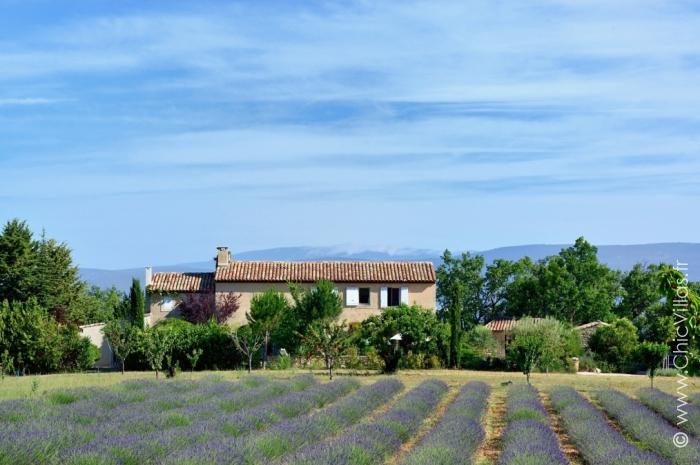 Lavandes du Luberon - Location villa de luxe - Provence / Cote d Azur / Mediterran. - ChicVillas - 27